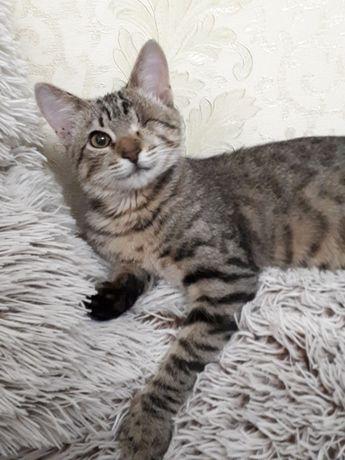 Активный полосатый котенок с одним глазиком (кошечка), Джози, 6 мес