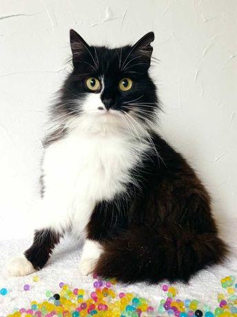 Кошечка Эстер- роскошная пушистая красавица