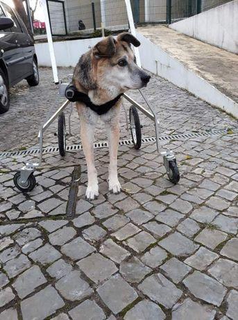 Cadeira de rodas para animais APOIO INTEGRAL