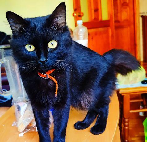 чернии кот с желтыми глазами