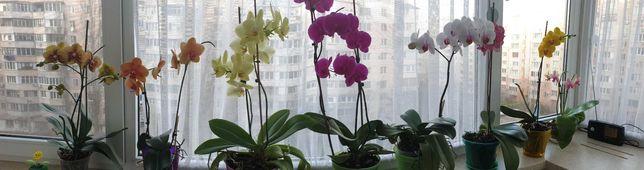 Продам орхидеи разные