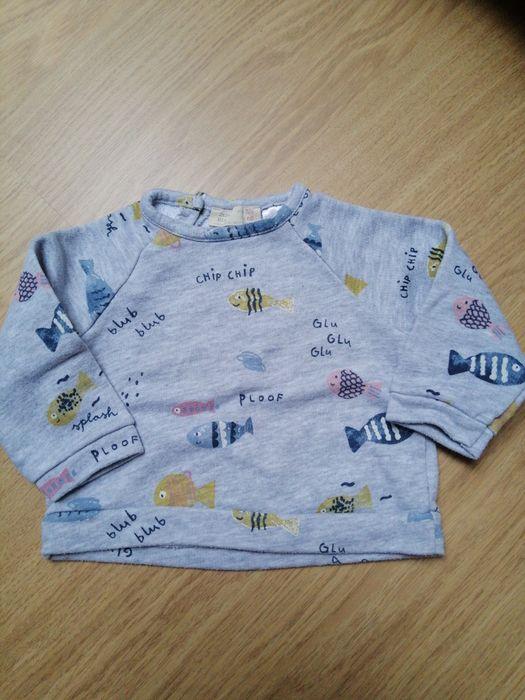 Bluza Zara mini 68 Pruszowice - image 1