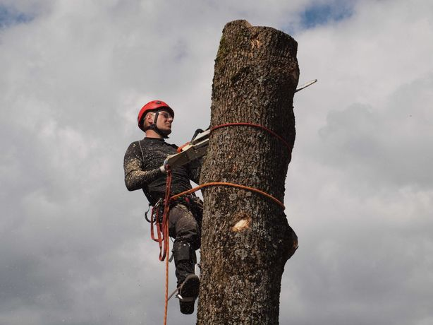 Wycinka i pielęgnacja drzew