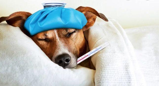 Olá seu amigo de quatro patas esta doente?  Calma iremos te ajudar!