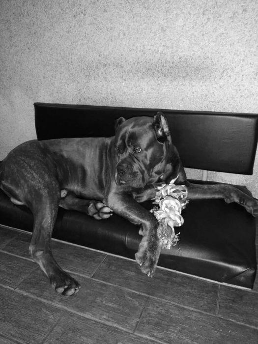 Лежаки для собак Запорожье - изображение 1