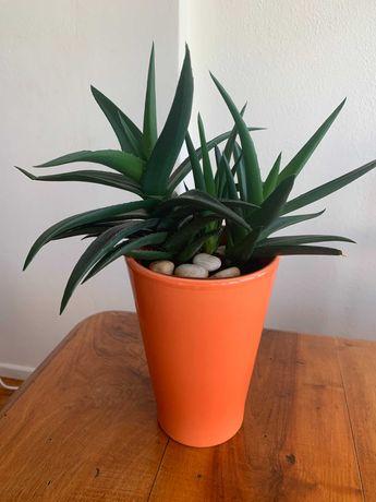 Planta suculenta + cachepô de cerâmica laranja