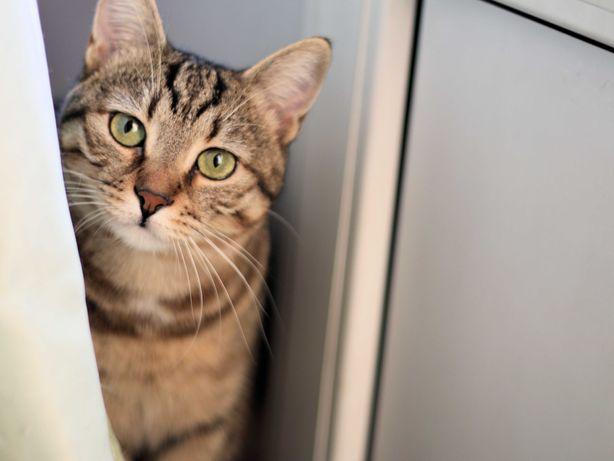 Ласковая трогательная кошка 10 месяцев стерилизована