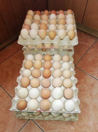 Jajka wiejskie od młodych kur świeże, zdrowe, smaczne Moja Kurka
