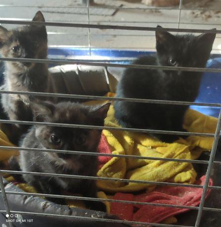 PILNE!! Koty około 2 miesięczne