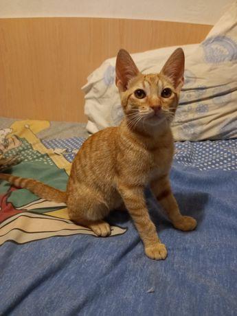 Gato menino de 4 meses