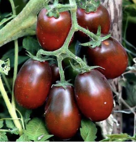 Рассада томатов Де барао Черный мавр