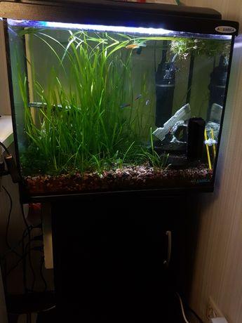 Продам аквариум 60л со всем оборудованием и тумбой