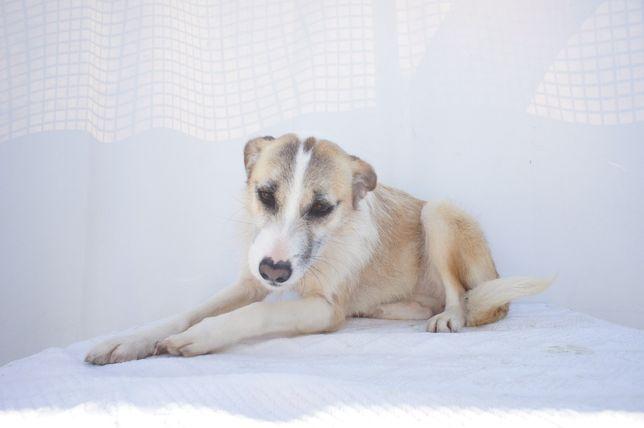 Yuca - cadela já esterilizada