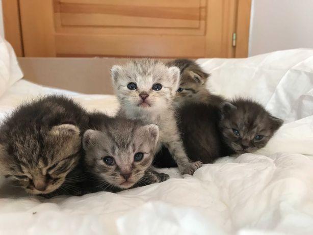 Oddam małe kotki w dobre ręce