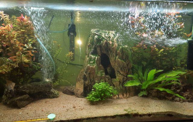 Akwarium z wyposażeniem 120l