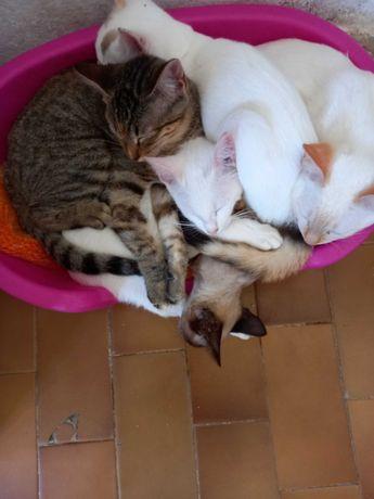 Dou gatos com urgência