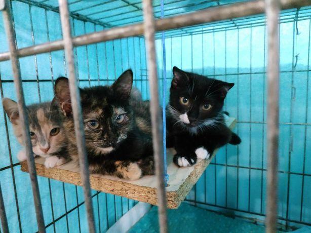 Котята с приюта