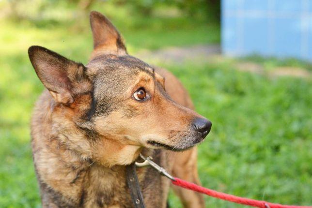 Умный, добрый и послушный пёс Патрик, 7 лет