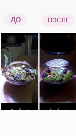 Продаю мох для террариума и улиток