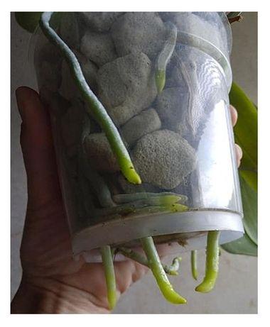 Субстрат для орхидей пеностекло GROWPLANT фр. 10-20 мм 3 л