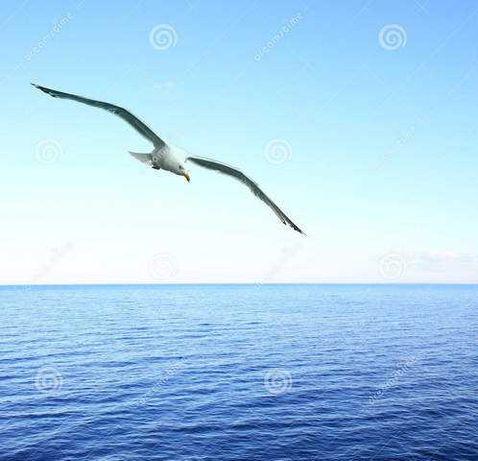 Участок у моря.  1 сотка 14600 у.е  4 тв