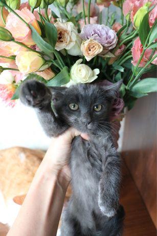 Котик бесплатно