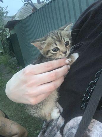 Отдам котят в добрые любящие руки
