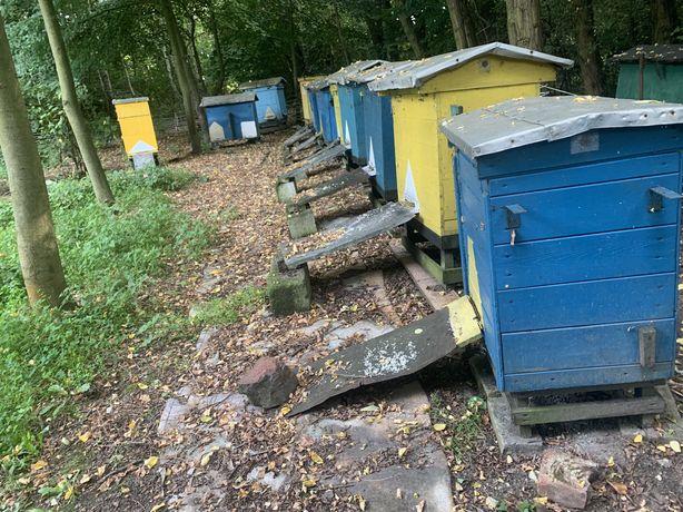 Sprzedam Ule, pszczoły