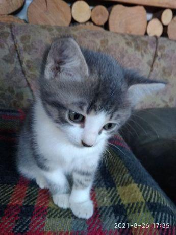 Кошеня 2-місячне шукає родину / кіт в хороші руки