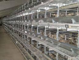 Виготовляємо та продаєм клітинне устаткування для вирощування курей