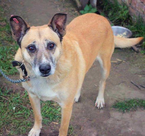 Стерилізована собачка, гарно охороняє, шукає добрі руки