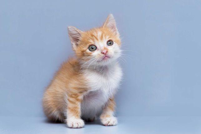 Отдам в хорошие руки котенка мальчика Берти.