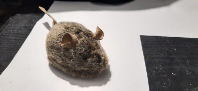 Myszka dla kota, dźwięk i światełko