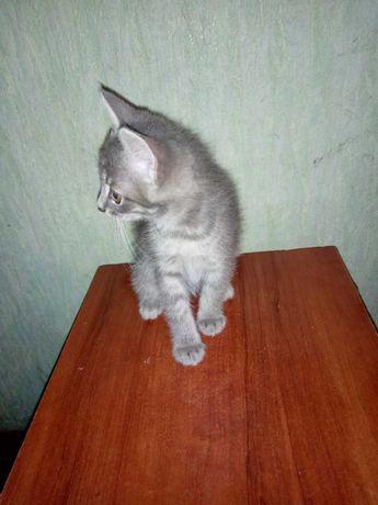 Кошечка невероятно мягкая светло серая