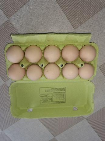 Jajka kurze z wolnego wybiegu