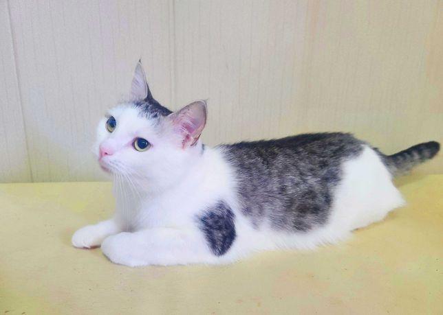 Кошка Маруся 1.5 года. Ласковая, спит на коленях