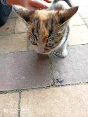 Kociaki szukają domów