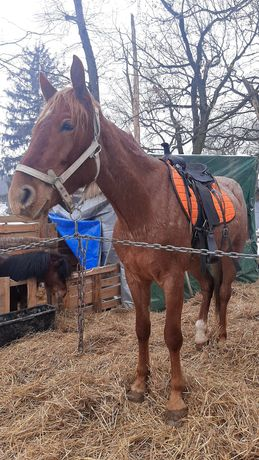 Седло вестерн на коня лошадь