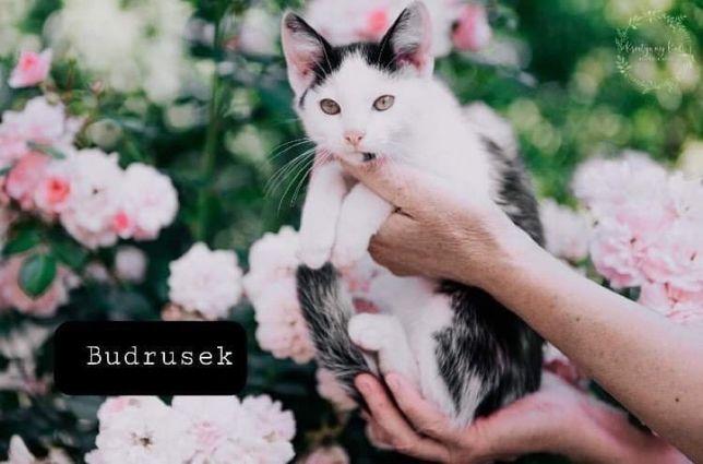 Kot do adopcji - Bielsko Biała