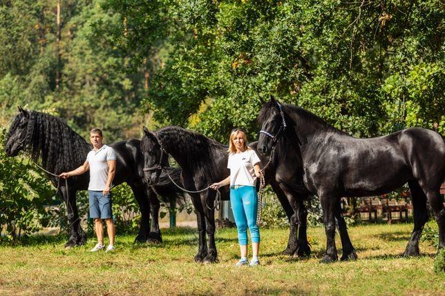 Фризские лошади большой выбор в Украине