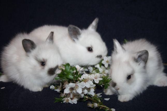 Крепкие крольчата в продаже