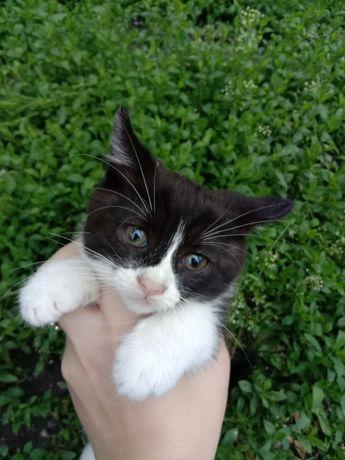 Котенок девочка в хорошие руки бесплатно. Котята даром. Срочно!