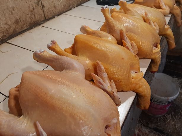 Тушки цыпленка табака