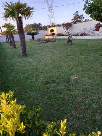 Jardinagem, manutenção, podas limpezas,vedações etc