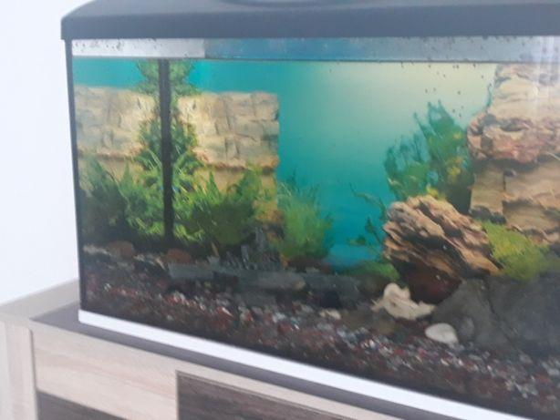 akwarium z osprzętem filtr kilka rybek ,