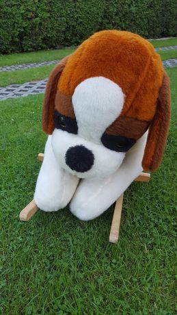 Sprzedam psa na biegunach