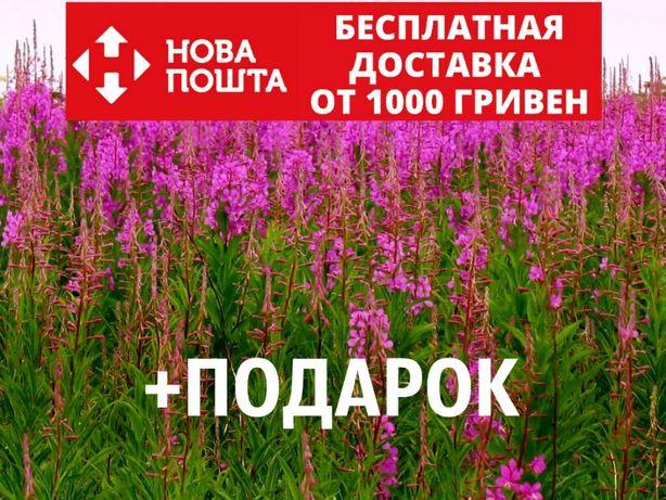Иван-чай семена 20 шт кипрей Chamaenérion angustifolium + подарок
