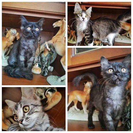 Котята в заботливую семью