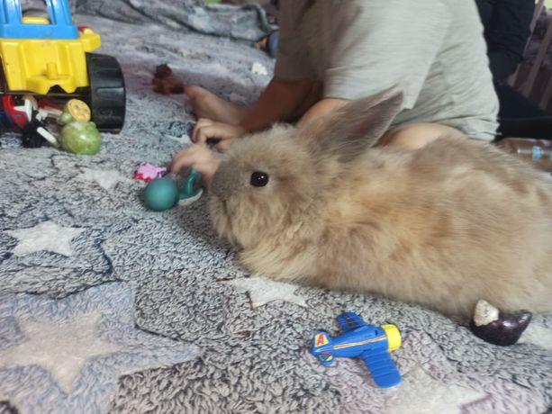 декоративні кролики красунчики