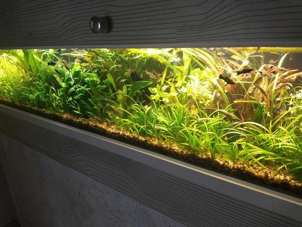 Nawóz uniwersalny  500 ml(rośliny akwariowe)